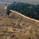 Amazzonia, il coronavirus non frena la deforestazione.